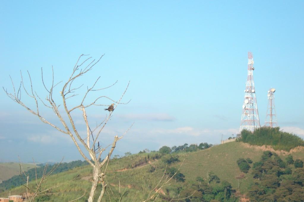 Alguns estados brasileiros já estão legislando a respeito do impacto ambiental da instalação de torres.